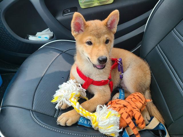 New Puppy Necessities